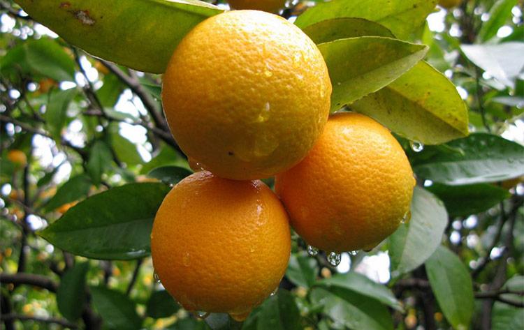 етерично масло от портокал eterim