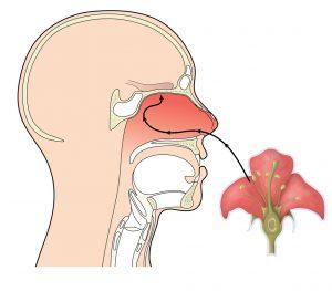 аромат етерим