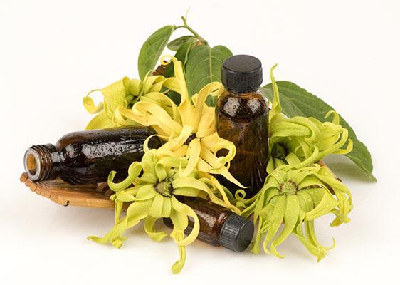 Етерично масло от Иланг Иланг в етерим