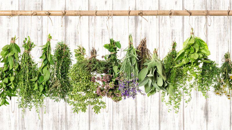 Растения за етерични масла